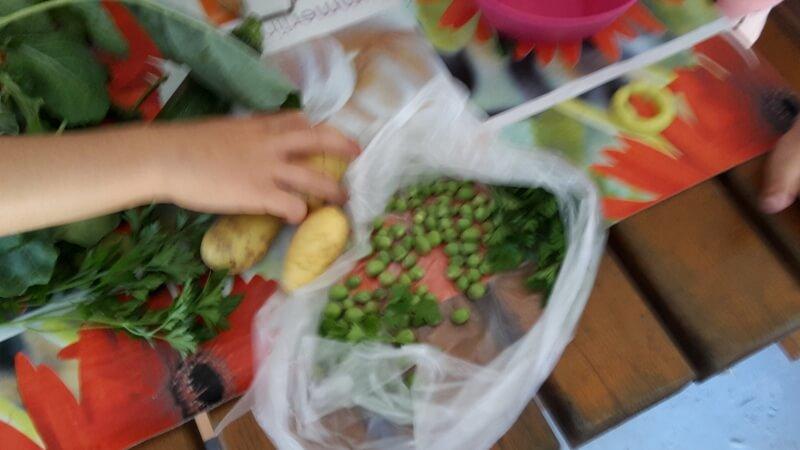 domaca zelenjava