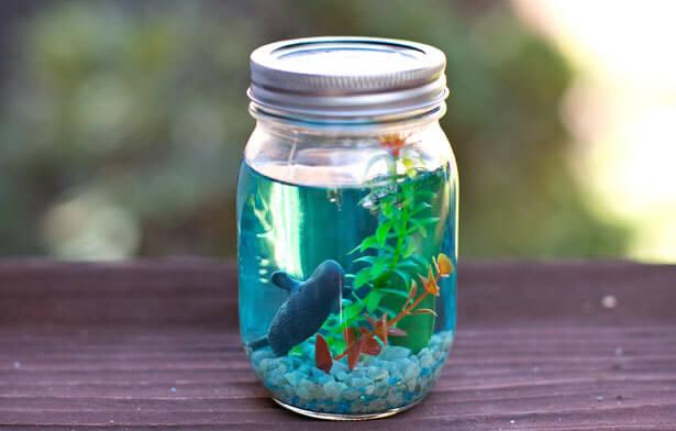domaci akvarij