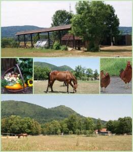 kmetija-cesenj