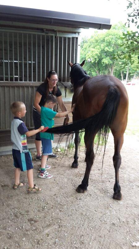 nega in jahanje konja
