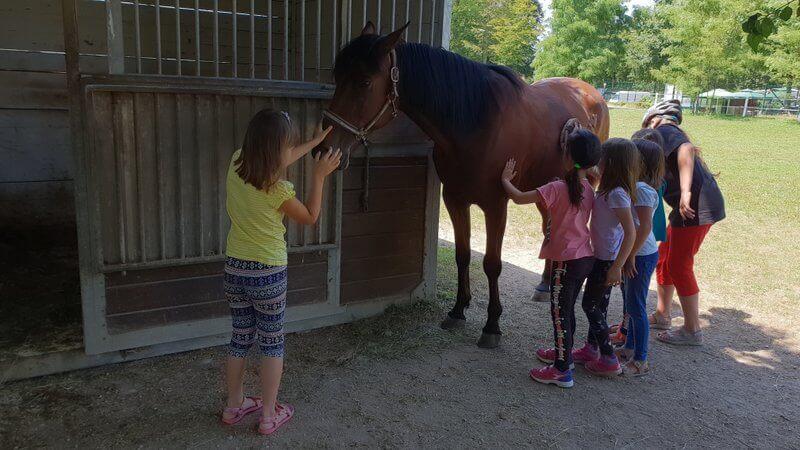 Nagradna igra: postani oskrbnik konja za 1 dan