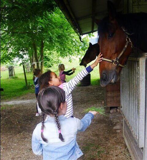 počitniško varstvo ljubljana jahanje konj hranjenje