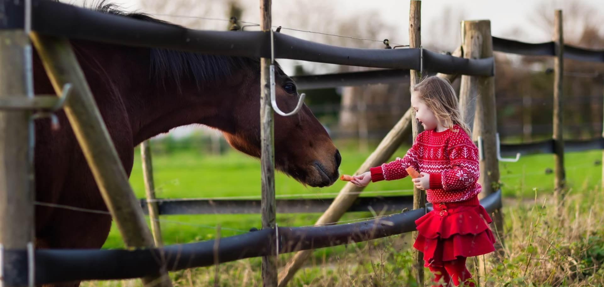 počitniško varstvo ljubljana jahanje
